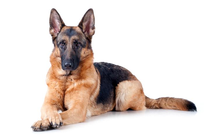 кастрация собаки киев